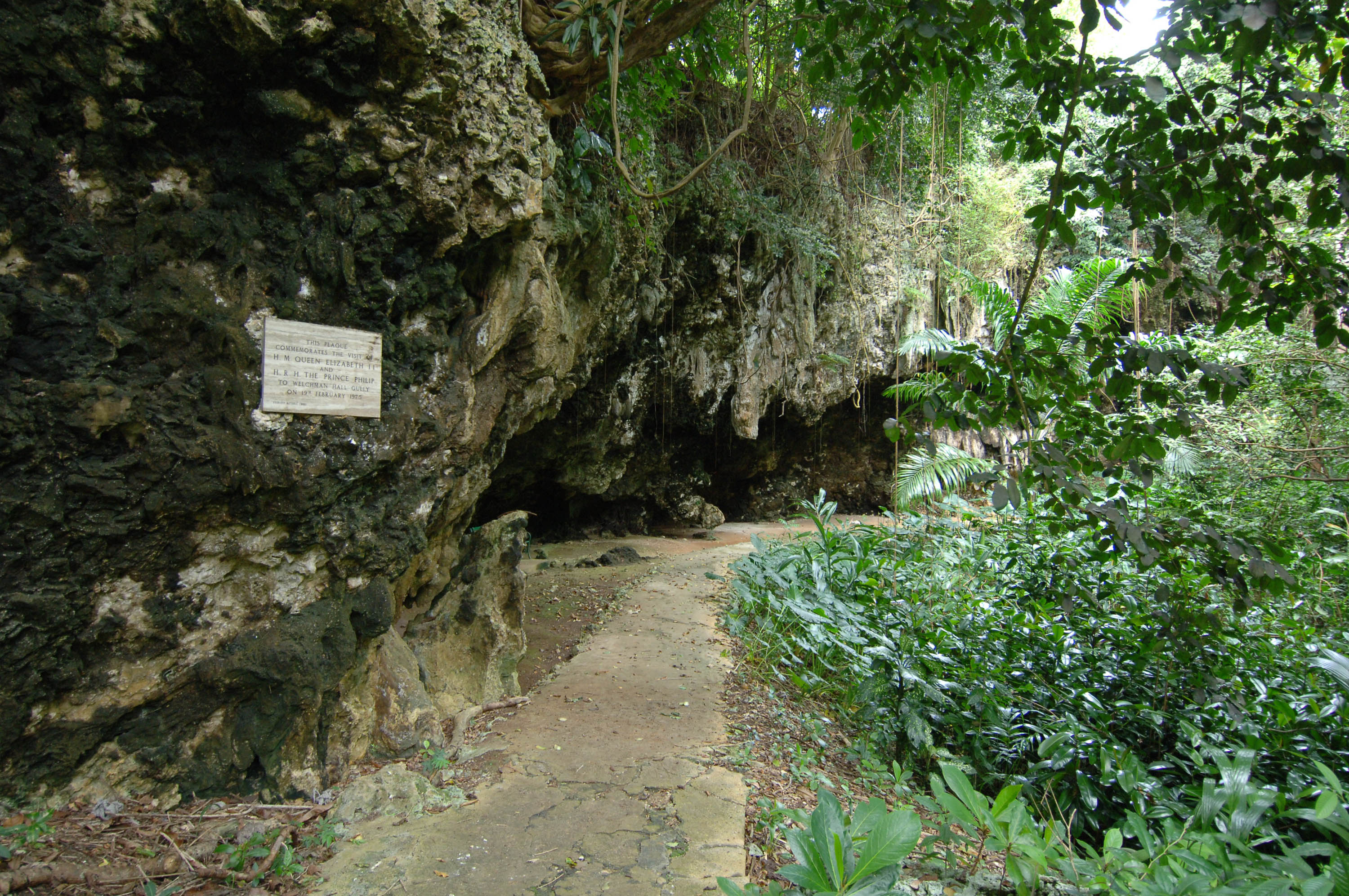 Welshman's Gully barbados2.jpg